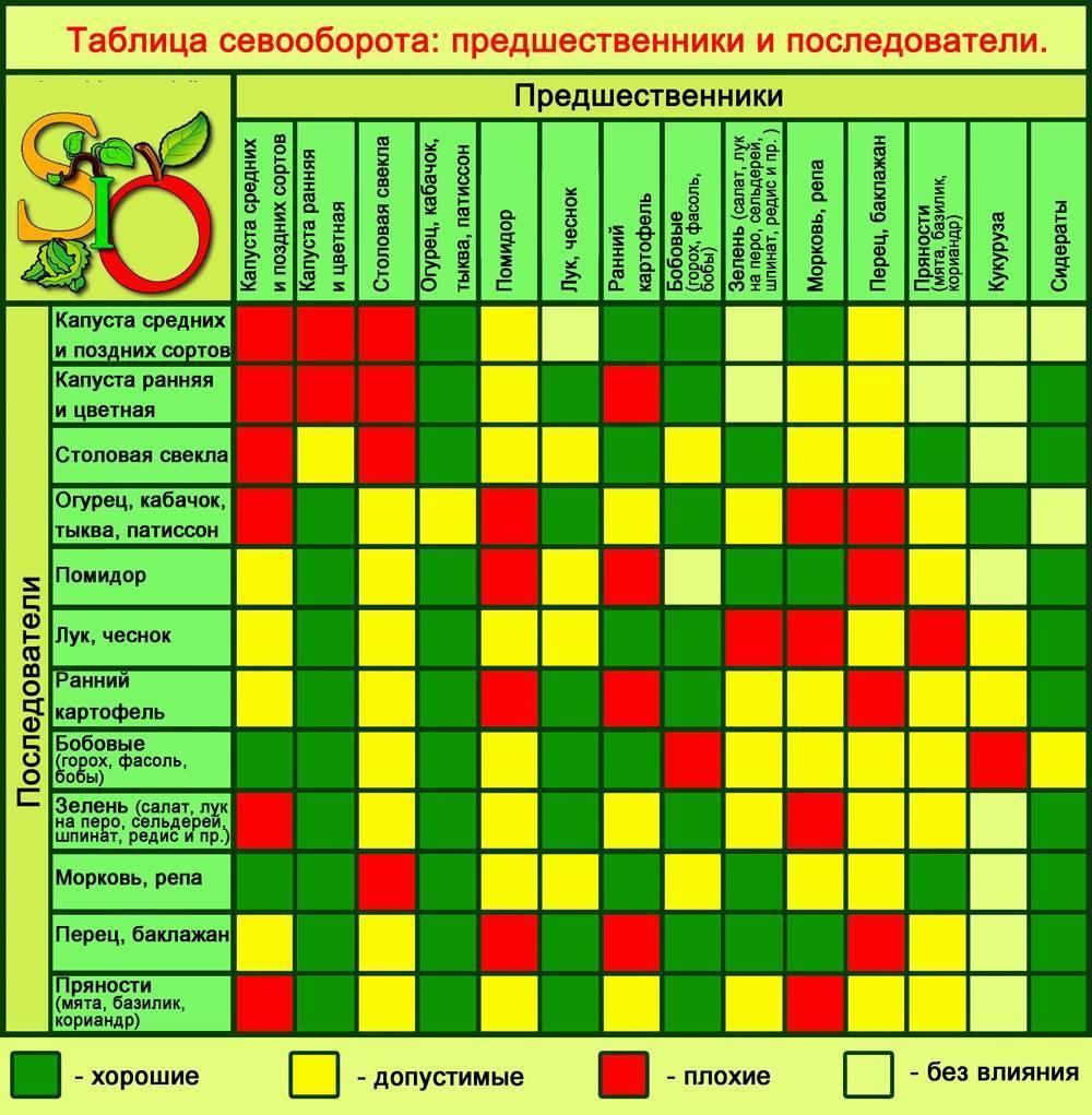 Что посадить после капусты и моркови на следующий год и с чем совместить посадки