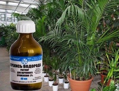 Перекись водорода для рассады помидоров – подкормка в домашних условиях, применение, отзывы