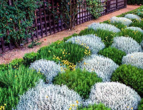 Полынь декоративная — простое, но эффектное украшение сада