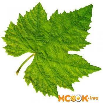 Виноградные листья: польза и вред для организма