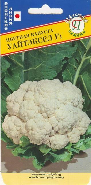 Как вырастить капусту «престиж f1» на дачном участке?