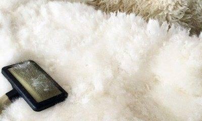 Как почистить белую овчину — remontir.info
