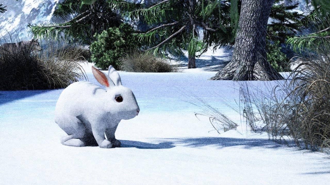 Что едят зайцы в лесу летом