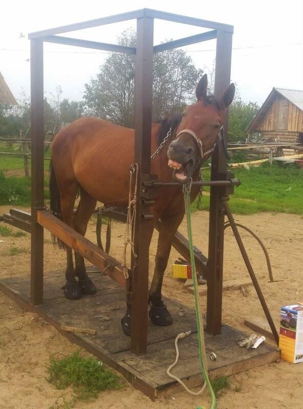 Копыта и подковы лошадей. история подковы