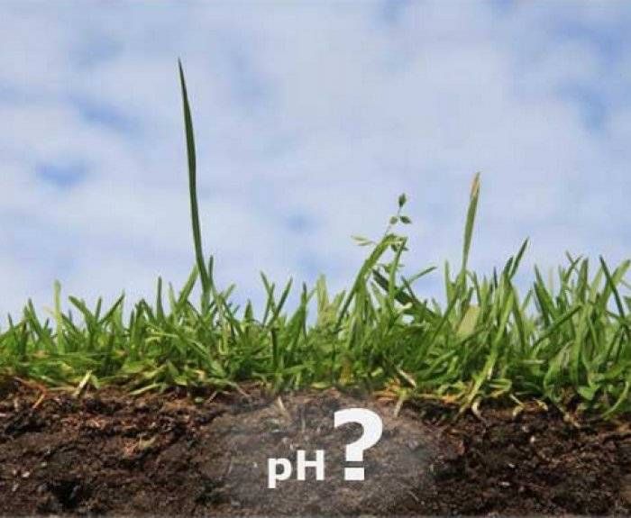Известкование почвы: для чего, чем и когда раскисляют почву