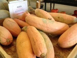 Семена тыква сладкий банан : описание сорта, фото. купить с доставкой или почтой россии.