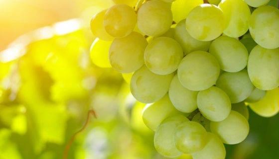 Виноград супер экстра: характеристика и описание, посадка и уход