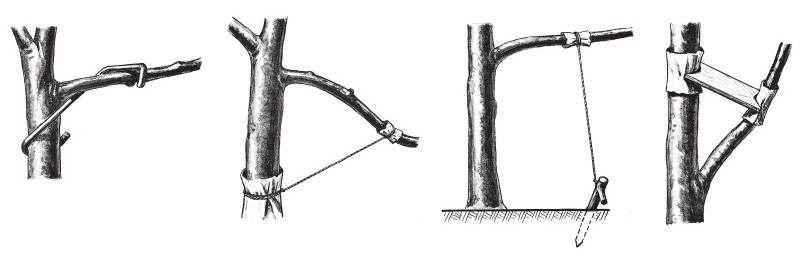 Обрезка яблони - фото и видео схемы правильной обработки дерева и примеры формирования кроны