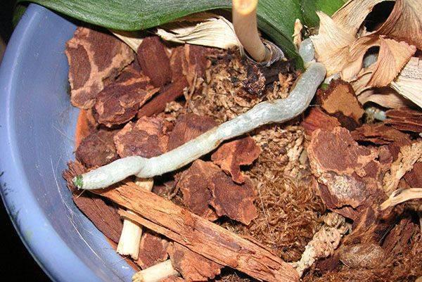 Кора для орхидей: какая кора нужна? особенности коры сосны и других деревьев. ее подготовка в домашних условиях. как ее кипятить?