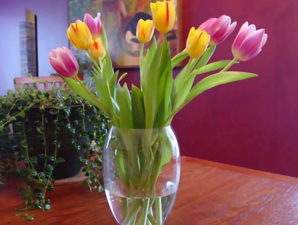 Как хранить луковицы тюльпанов после цветения зимой до посадки