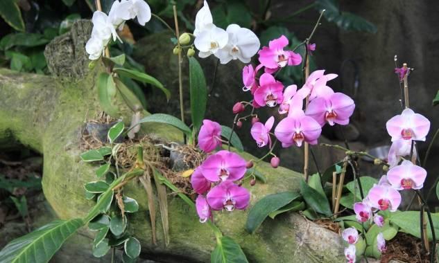 Орхидея родина растения