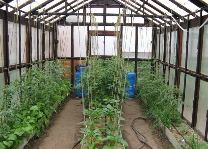 Как подвязать помидоры правильно — быстрые и простые способы подвязки овощей. техника подвязывания и 100 фото примеров подвязки томатов