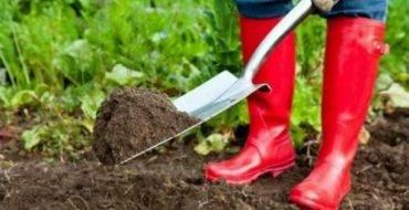Подготовка грядки под озимый чеснок осенью: как сделать правильно