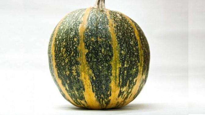Голосемянная тыква: описание растения и характеристики сорта