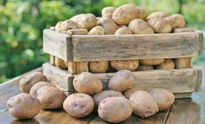 Описание сорта картофеля невский