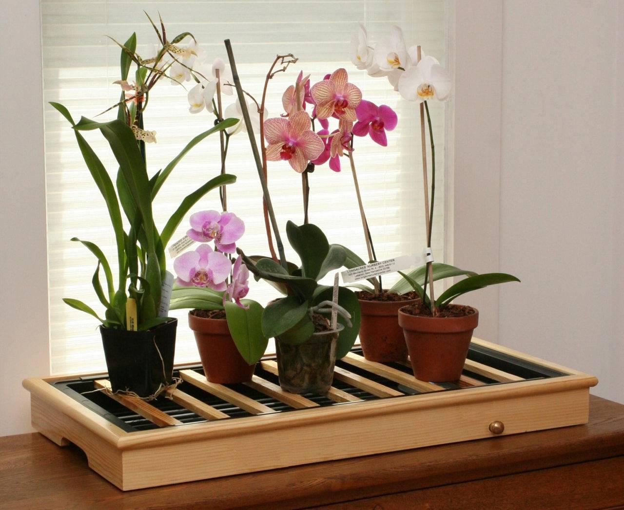 Орхидея: уход в домашних условиях после покупки фото видео