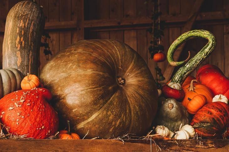 Тыквы: выращивание из семян, посадка и уход в открытом грунте, фото