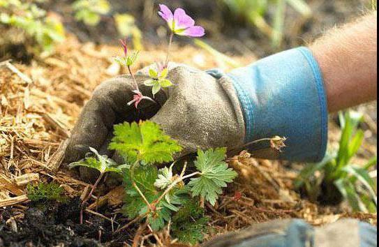 Как использовать опилки для огорода осенью и весной