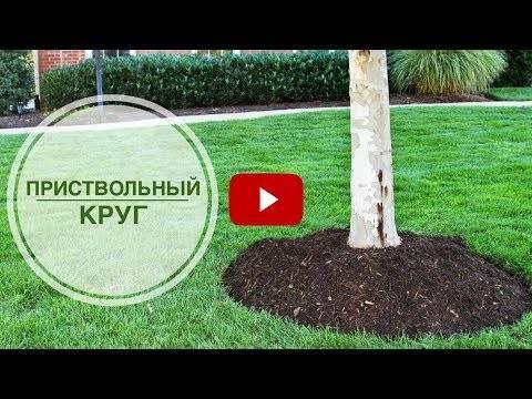 Приствольный круг плодового дерева — как сделать и оформить