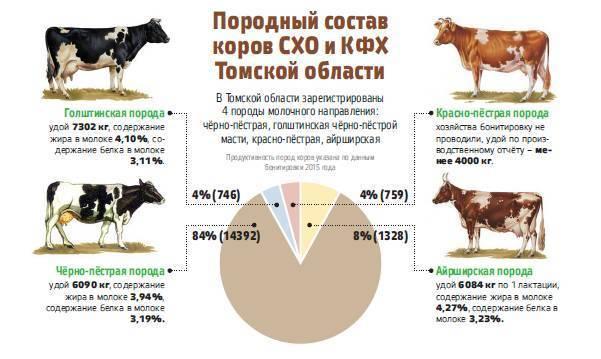 Особенности и нормы кормления коров