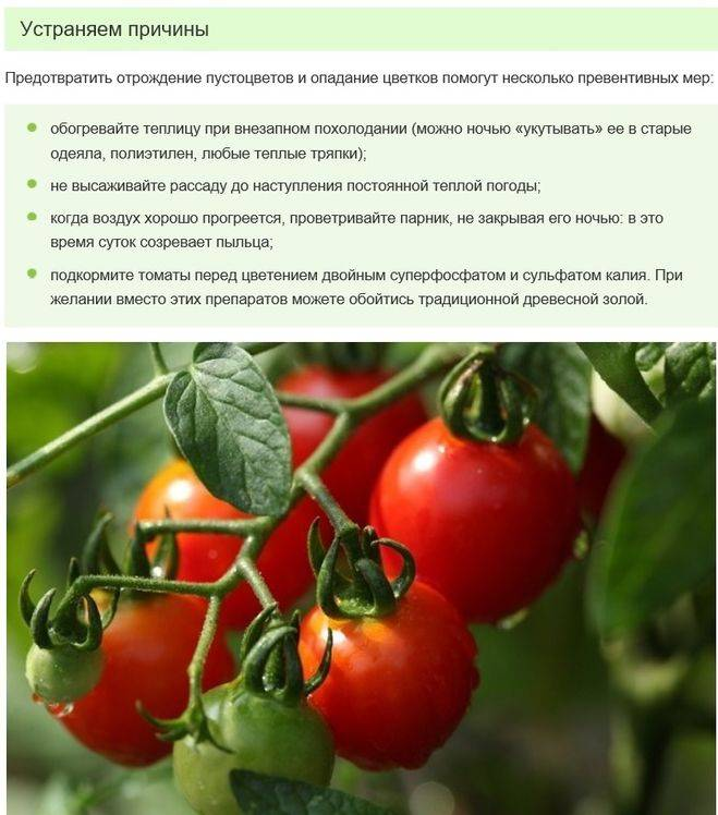 Пустоцвет на помидорах в теплице: почему образуется и что делать