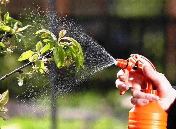 Строби, вдг (фунгициды, пестициды) — agroxxi