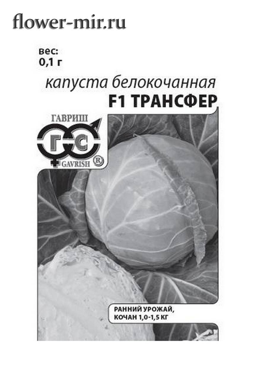 Описание капусты трансфер - агрономы