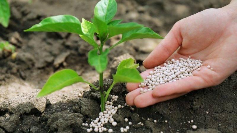 Чем подкормить огурцы во время цветения и плодоношения: особенности ухода и рекомендации по выбору состава