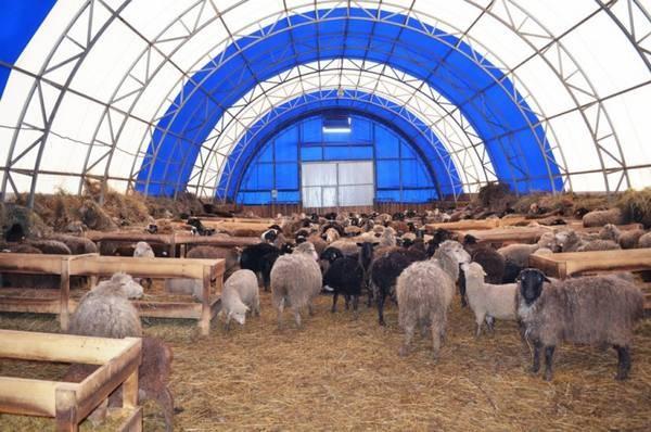 Помещение для овец: как самостоятельно сделать овчарню?