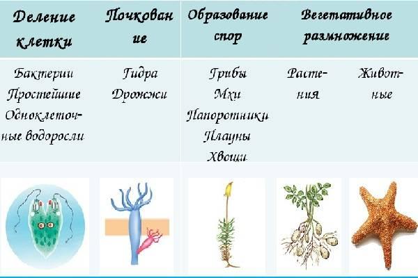 Как размножаются грибы - информация для начинающего грибовода