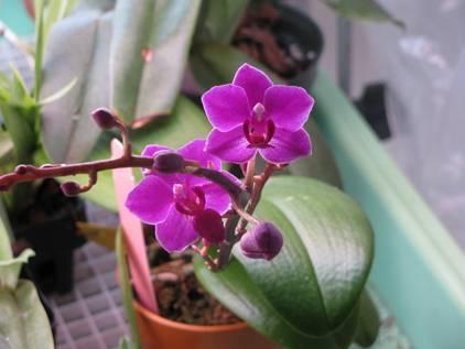 6 причин, почему у орхидеи сохнут корни. как спасти растение и меры профилактики
