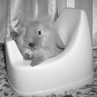 Как приучить кролика к лотку? полезные советы по приучению кроликов к туалету в квартире. выбор угловых и других лотков