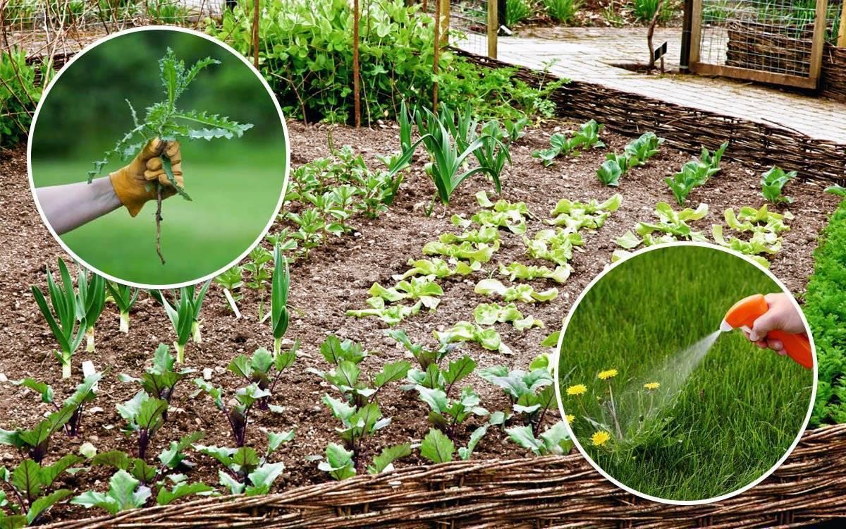 Как легко избавиться от травы и сорняков на огороде: самые эффективные методы
