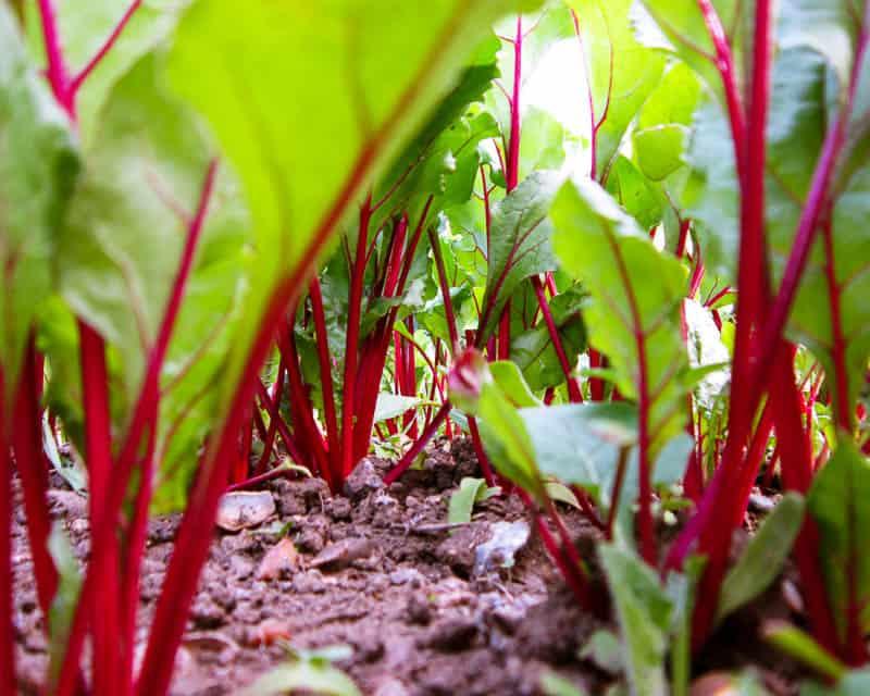 Сколько всходит газонная трава? узнайте в нашей статье.