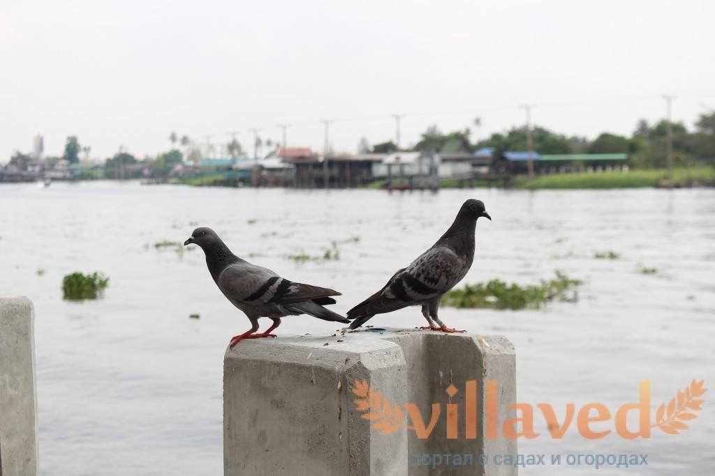 Как избавиться от голубей на подоконнике: отпугнуть, отвадить, прогнать