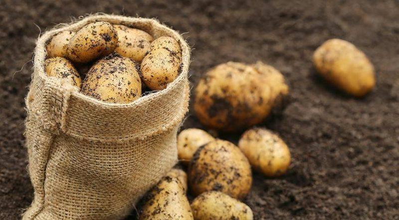 Удобрения для картофеля: какие вносить при посадке в лунку и осенью? лучшие внекорневые и корневые подкормки для выращивания картофеля