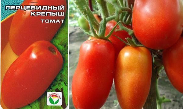 Томат «перцевидный»: характеристика и описание сорта