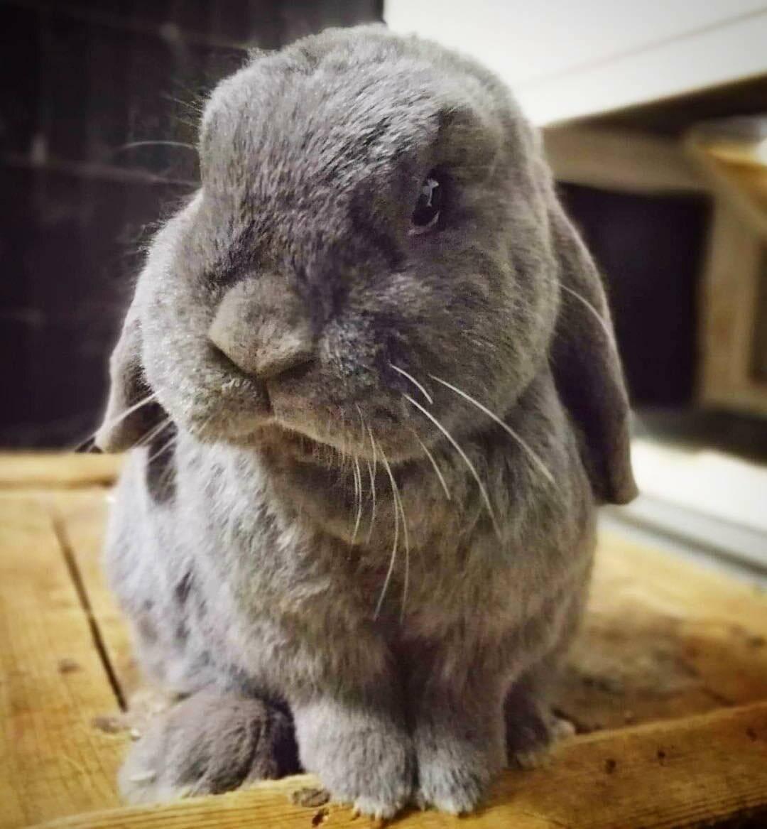 Почему декоративный кролик кусается и что с этим делать