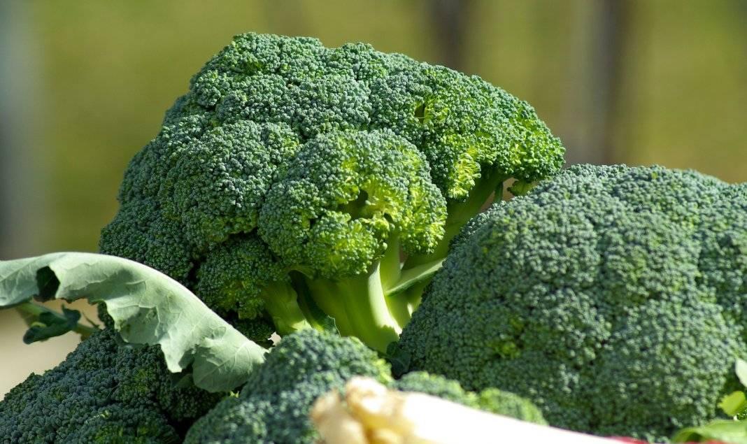 Как выращивать капусту брокколи – правила и секреты урожайности!