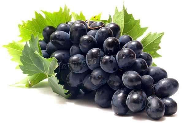 Виноград черный палец: описание сорта, фото, отзывы