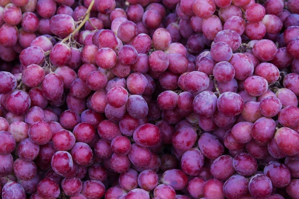 Виноград московский белый: фото, описание сорта