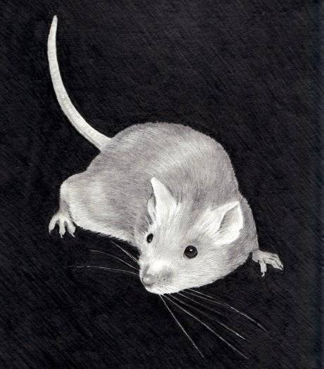 Как навсегда вывести мышей на даче