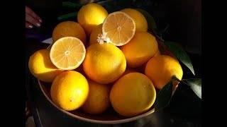 Лимон мейера: описание сорта, выращивание и уход в домашних условиях, обрезка