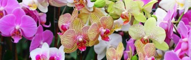 Как бороться с болезнями и вредителями на листьях орхидии