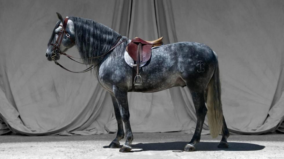 Как оседлать лошадь: как седлать коня и как правильно сесть на него