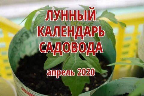 Когда сажать кабачки в открытый грунт в 2020 году по лунному календарю фото видео