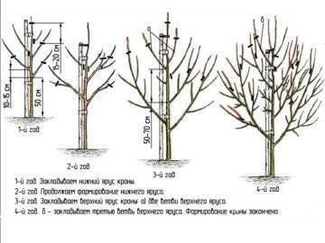 Обрезка деревьев весной: видео для начинающих