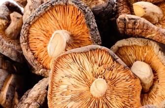 Как сушить белые грибы: правильная сушка в домашних условиях - засушим.ru