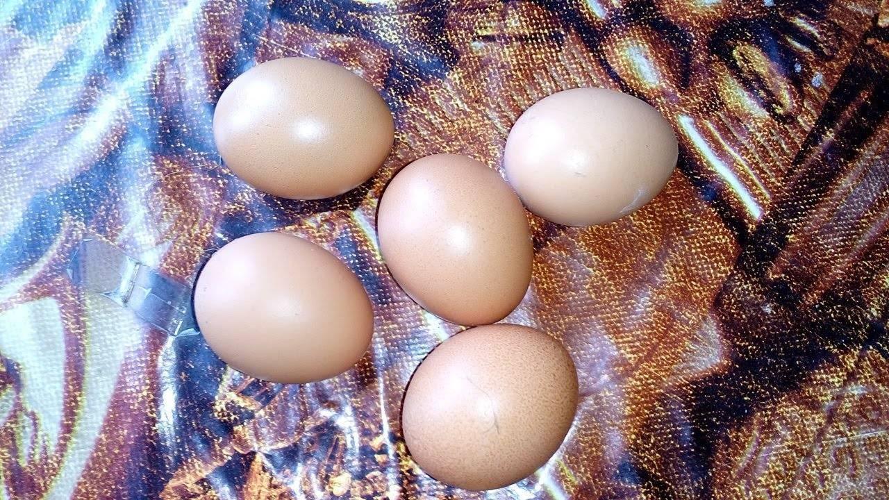 Причины нарушения формирования оболочки или почему скорлупа у яиц мягкая?