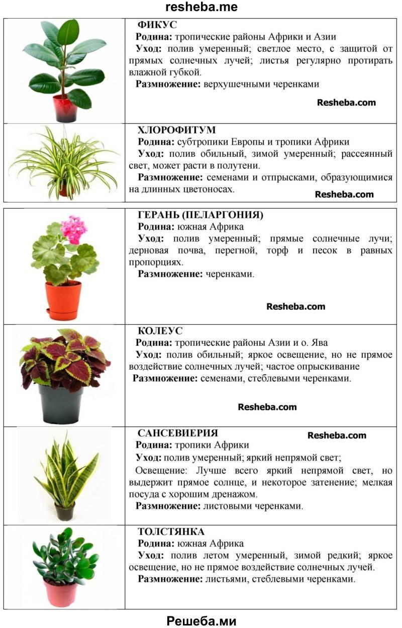 Как правильно ухаживать за цветами в домашних условиях :: инфониак